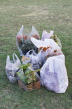 Plants packed for delivery Stock Photography