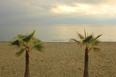 Plants of palm in front of the sea. Two plants of palm in front of the sea Royalty Free Stock Images