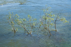 Plants at Parana River in Iguazu Park Royalty Free Stock Image