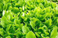 Plants in park. Need for life. Nice green plants outside our industrial life Royalty Free Stock Photography