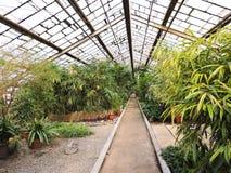 Plants2 Stock Image