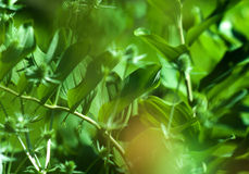 Plants pattern. Eco nature summer green fresh abstract background: pattern of different plants and leaves consisted of focused and defocused layers. Can be used Stock Photos