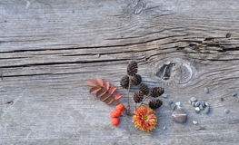 Plants and Pebbles on Old Board Stock Image
