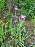 Plants stock photos