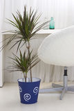 Plants in plant pots in the interior Royalty Free Stock Photo