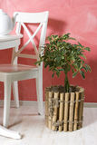 Plants in plant pots in the interior Royalty Free Stock Photography