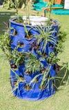 Plants in plastic drum Stock Photo