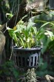 Plants on plastic pot Royalty Free Stock Image