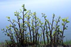 Plants on pondside. Fresh plants on pondside blue water Stock Images