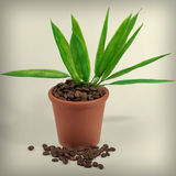 Plants in a pot from coffee Royalty Free Stock Photo