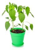 Plants in pot Stock Photo
