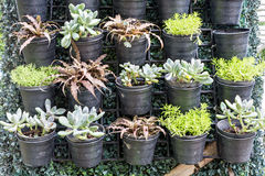 Plants in pot Royalty Free Stock Photos