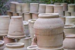 Plants pot Stock Images