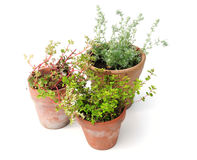 Plants in pots Royalty Free Stock Photos