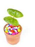 Plants in pots. Stock Photos