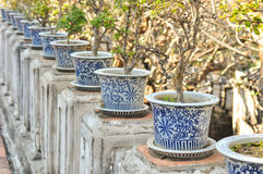 Plants in pots Royalty Free Stock Images
