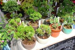 Plants, pots, bonsai trees sale market, Takayama, Japan Royalty Free Stock Images
