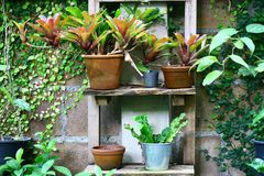 Plants in pots stock images