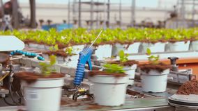 Plants in pots on the conveyor, moving plants in pots on the pavement. Modern plant growing plants, robotic greenhouse.  stock video