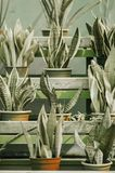 Plants in pots in the garden. Poster: plants in pots in the garden Stock Image
