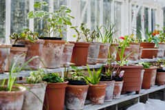 Plants on pots in glasshouse. Pots in glasshouse on country Stock Photos
