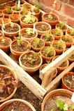 Plants pots  Royalty Free Stock Image