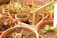 Plants pots  Stock Photo