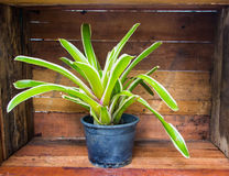 Plants in pots placed Royalty Free Stock Images