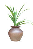 Plants in pots. Plant in pots on a white background Stock Image