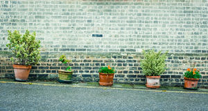 Plants in pots Royalty Free Stock Photography