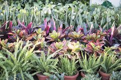 Plants in pots for sale at nursery Royalty Free Stock Photo