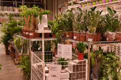 Plants in pots in the  store Royalty Free Stock Images