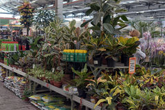 Plants in pots in the  store Stock Photography