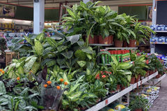 Plants in pots in the  store Royalty Free Stock Photos