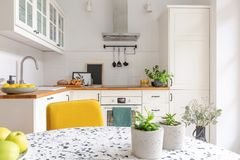 Table in stylish white kitchen interior, real photo. Plants in pots on the table in stylish white kitchen interior, real photo stock photos