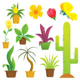 Plants in Pots. Vector illustration of potted plants in cartoon style royalty free illustration