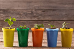 plants  in pots on wooden background Royalty Free Stock Images