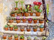 Plants potted succulents cactus Royalty Free Stock Images