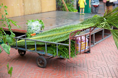 Plants prepared to decorate the streets of Bangkok Stock Photo