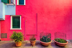 Plants with red facade Stock Photos