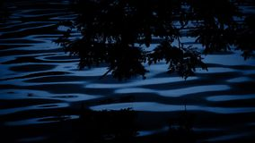 Plants Reflect In Lake At Night. Plants in the shade by rippling evening lake stock video footage