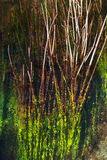 Plants reflections in watter Royalty Free Stock Photos