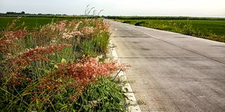 Plants beside the road and rice fields royalty free stock photography