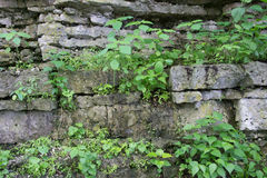 Plants on Rock Cliff Stock Photography