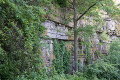 Plants on Rock Cliff Royalty Free Stock Photography