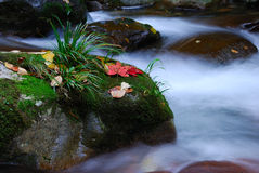 Plants on rocks in river. Plants and fallen leaves on rocks in a river Royalty Free Stock Images