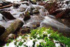 Plants, rocks, snow and river. In a french forest during the spring season. Long exposure Stock Photography