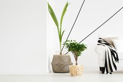 Plants in room Royalty Free Stock Photography