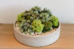 Plants in round white ceramic pot Stock Image