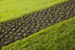 Grass, plants, soil Royalty Free Stock Images